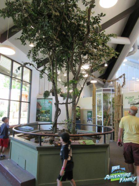 albuquerque-botanic-garden-13