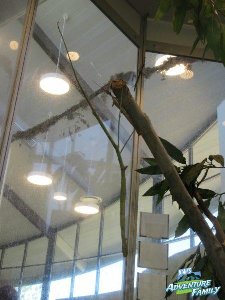 albuquerque-botanic-garden-14