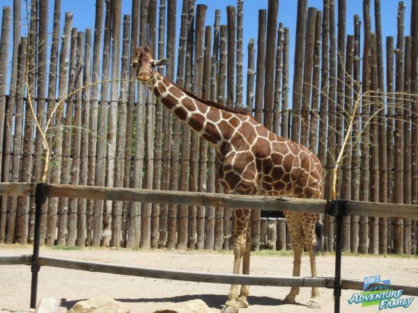 albuquerque-zoo