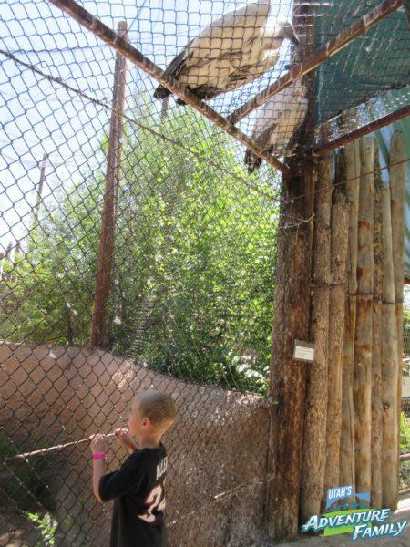 albuquerque-zoo-13