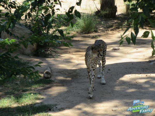 albuquerque-zoo-14
