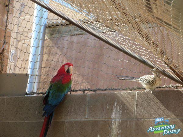 albuquerque-zoo-3