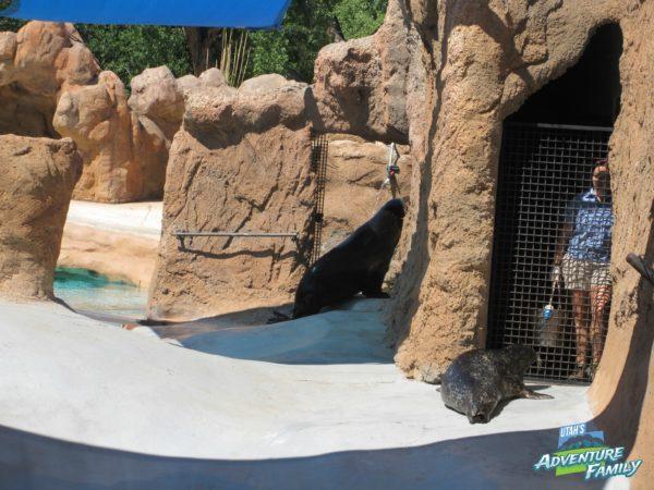 albuquerque-zoo-9