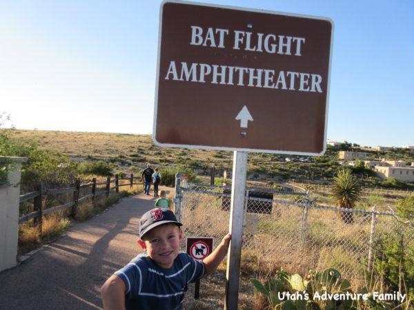 bat-flight-program
