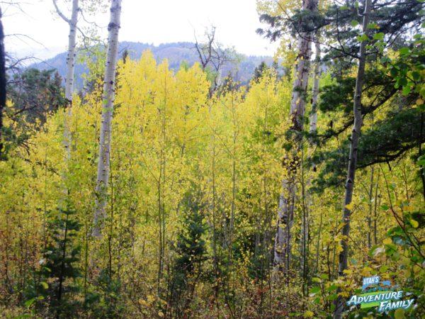 fall-drives-alpine-loop-3