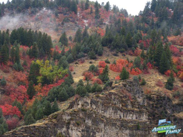 fall-drives-logan-canyon-2