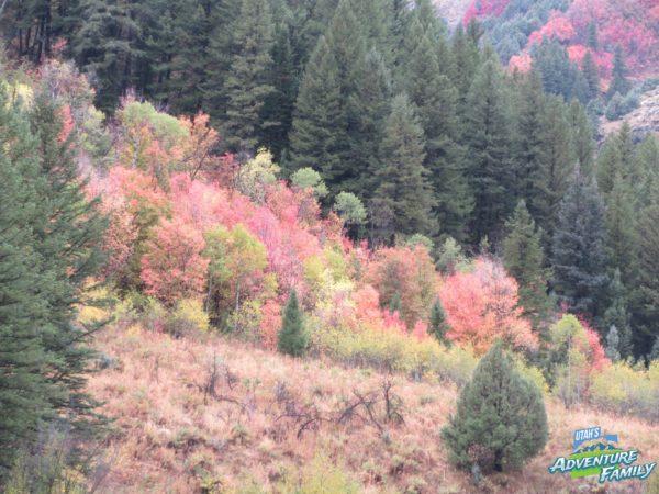fall-drives-logan-canyon-3