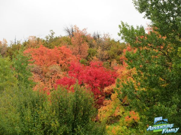 fall-drives-provo-canyon-1
