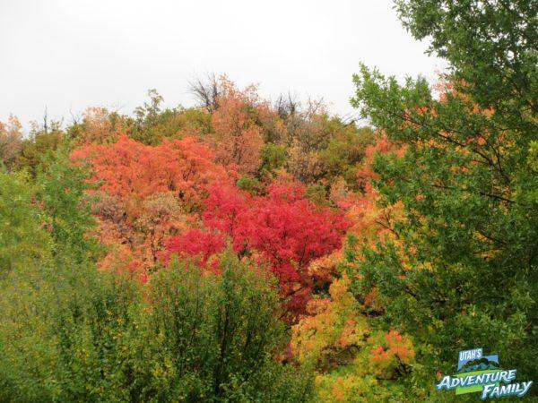 fall-drives-provo-canyon-1