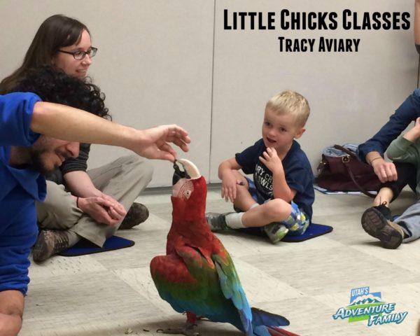 little-chicks