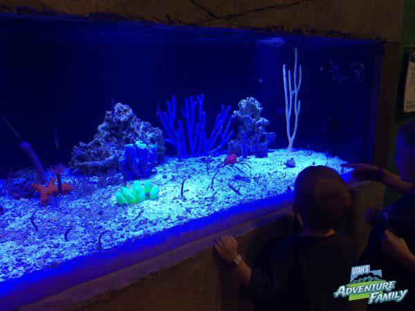 Seaquest Interactive Aquarium Utah 39 S Adventure Family
