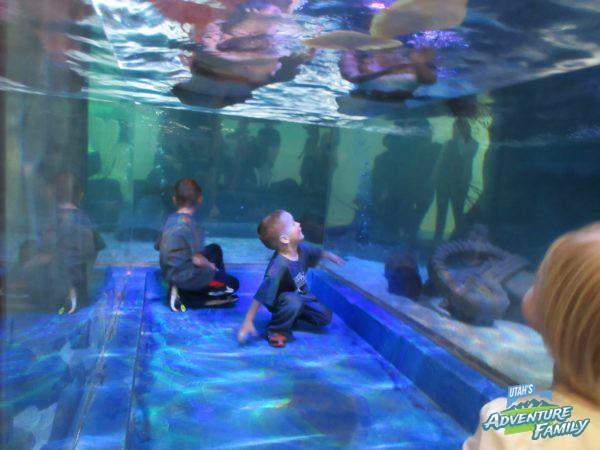 Seaquest Interactive Aquarium Utah Review By Natalie Ockey