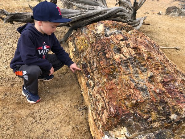 large piece of petrified wood in Escalante Petrified Forest State Park