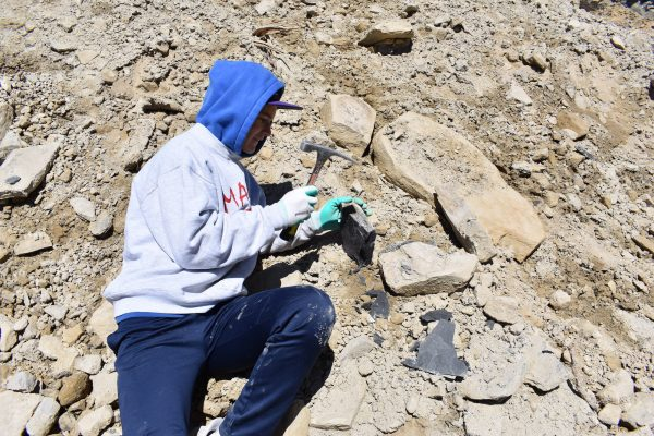 A kid hammering rocks while looking for fossils.