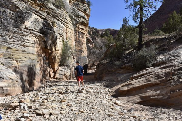 rocky trail on the Hobbit Hole trail in Zion National Park